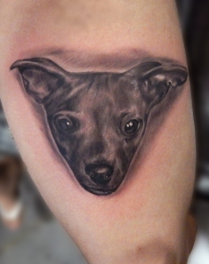 sara dog portrait