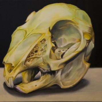 rabbit-skull-orig-and-prints